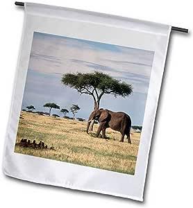 3dRose fl_205558_2 肯尼亚,Maasai Mara National Reserve,非洲大象花园旗,45.72 x 68.58cm