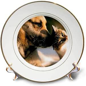 """猫 - 猫和狗 - 盘子 8"""" cp_1055_1"""
