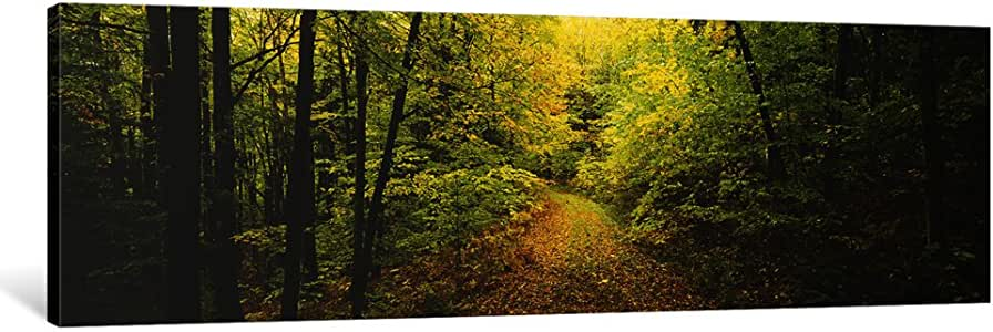iCanvasART PIM3342-1PC6 Dirt Road Passing Through a Forest, Vermont, USA Canvas Print by Panoramic Images, 1.5 by 48 by 16-Inch