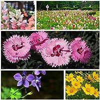 多年多色野花组合系列 耐寒耐旱 四季播种 (*纯活种子50g) 散装 多种颜色