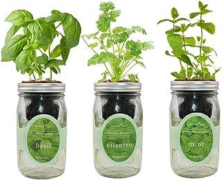 环保水培草本生长套件,自动浇水梅森罐草本花园入门套件,室内种植您自己的草本植物 Basil, Cilantro & Mint