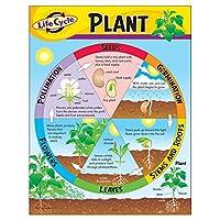 Trend Enterprises Inc 植物生命周期学习图表,43.18 厘米 x 55.88 厘米