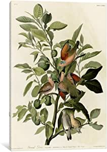 iCanvasART VAC333-1PC3-18x12 Ground Dove Canvas Print by Vintage Apple Collection, 18 by 12-Inch, 0.75-Inch Deep