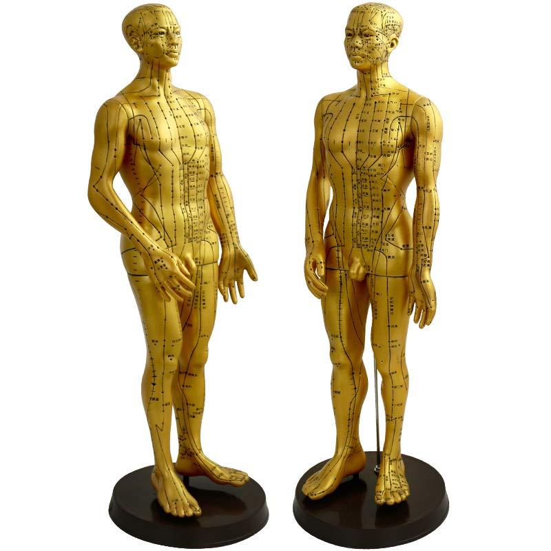人体色鲜色什么_采药师(caiyaoshi)人体经络穴位模型中医用针灸铜人女模男模铜色高清