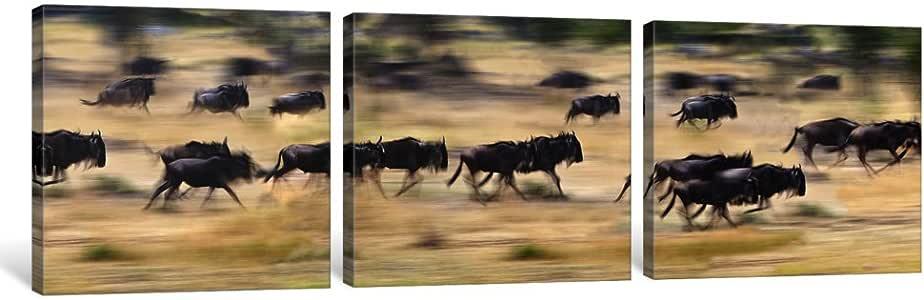 "iCanvasART 3 件套 Wildebeests 在野外奔跑的赫德,坦桑尼亚帆布画,Panoramic Images 图案,1.5 x 48 x 16 英寸 36"" x 12"" PIM10186"