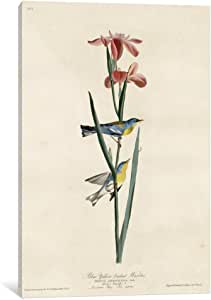 iCanvasART VAC397-1PC3-12x8 Yellowbackedwarbler Canvas Print by Vintage Apple Collection, 12 by 8-Inch, 0.75-Inch Deep