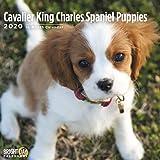2020 Puppies 16 个月 12 x 12 挂历 Bright Day Calendars 出品 Cavalier King Charles Spaniel Puppies 2020
