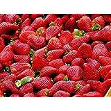 草莓种子 100 甜美*美红色草莓果攀岩种子 适用于种植繁殖浆果种子
