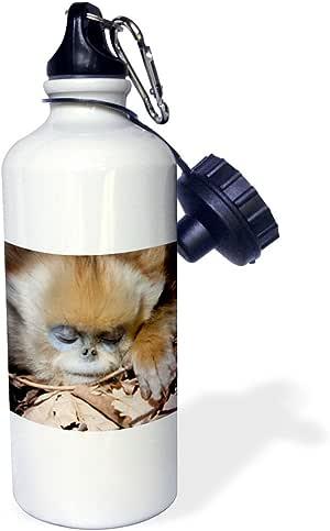 3dRose wb_132372_1 英寸中国,Qinling 山,金色猴睡觉 AS07 AGA0032 爱丽丝加兰 运动水瓶,21 盎司,白色