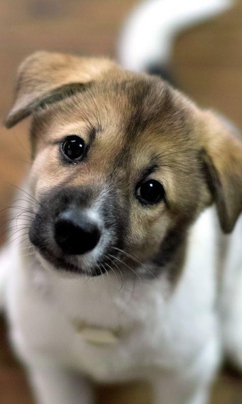 可爱狗狗的世界动态壁纸