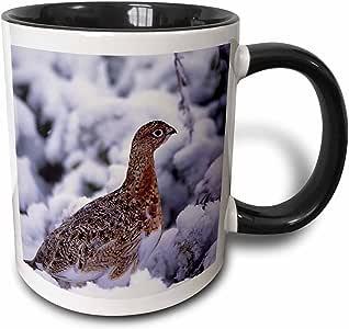 3drose danita delimont–鸟–美国,阿拉斯加迪纳利 NP , willow ptarmigan 鸟–us02csl0087–查尔斯 sleicher–马克杯 黑色/白色 11 oz