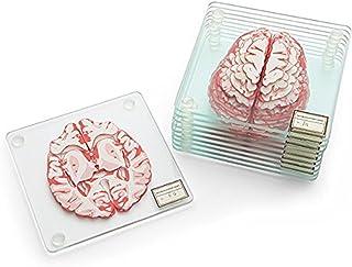 人体工程学脑样本杯垫(10 件套) - 心形杯垫套装也提供 Brain Coasters Brain Specimen Coasters pre-med
