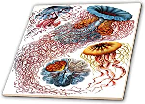 florene 水下动物–1904德国生物学家复古 drawings OF 水母–瓷砖