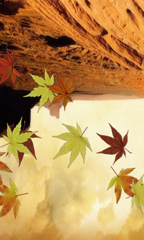 秋风落叶动态壁纸