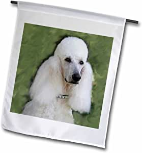 Dogs Poodle - 标准贵宾犬 - 旗帜 12 x 18 inch Garden Flag fl_1298_1
