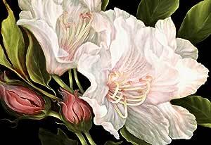 大花绘油画艺术花卉盒油画可直接悬挂 76.2 X 50.8 厘米