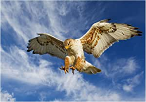 PHOTO NATURE BIRD PREY EAGLE HUNTING ATTACK 镶框印画 F12X3252 仅印制/无框 12-Inches x 16-Inches F12X3252_Print only_Unframed
