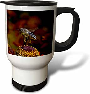 3drose danita delimont – insects – 蜜蜂飞行 OVER 鲜花,昆虫 – NA02 amr0005 – andres morya hinojosa – 旅行杯 天然 14 oz