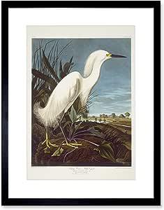 绘画 BIRD AUDUBON SNOWY HERON EGRET 镶框印画 F12X3585 黑色 12-Inches x 16-Inches F12X3585_BL