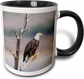3drose danita delimont–鸟–怀俄明州展翅秃鹰 roosting ON SNAG .–马克杯 黑色 11-oz Two-Tone Black Mug