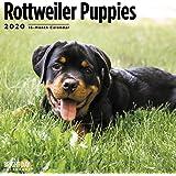 2020 Puppies 16 个月 12 x 12 挂历 Bright Day Calendars 出品 Rottweiler Puppies 2020