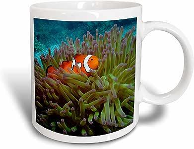 danita delimont–鱼–western clownfish ,大 barrier REEF , australia-au01dwa3022–David WALL–马克杯 白色 15盎司