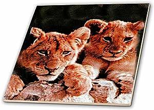 野生动物–非洲 LION 小熊–瓷砖