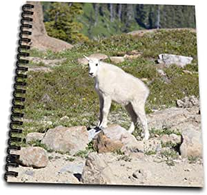 3dRose db_96441_3 WA, Alpine Lakes, Ingalls Lake, Baby Goat-US48 JWI3945-Jamie and Judy Wild-Mini Notepad, 4 by 4""