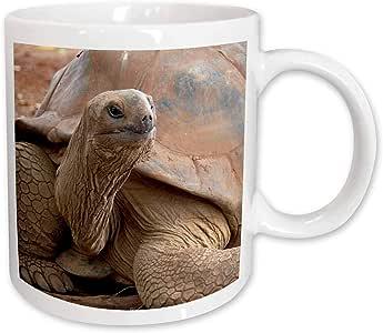 3dRose mug_131988_1 Mauritius, Seychelle Aldabran Land Tortoise Af28 Cmi0008 Cindy Miller Hopkins Ceramic Mug, 11-Ounce