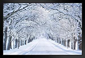 Poster Foundry 雪天冬街雪覆盖树照片 裱框海报 20x14 inches 348947