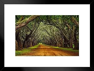 海报 Foundry Oaks on Plantation Road 照片艺术打印 ProFrames 哑光框架海报 26x20 inches 243963
