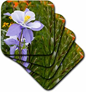 CST _ 36356BOB Kane 摄影鲜花–蓝色 columbine ( 科罗拉多州州花朵 )–杯垫