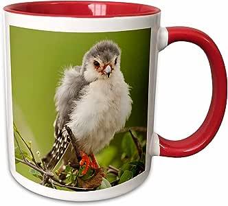 3drose danita delimont–鸟–肯尼亚, samburu 保护区, pygmy FALCON 鸟–af21jmc0278–JOE and Mary ANN mcdonald–马克杯 红/白色 11 oz
