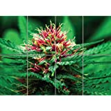 Doppelganger33LTD MARIJUANA FLOWER GIANT WALL 艺术印画海报 G780 A 47 inch x 33 inch 1