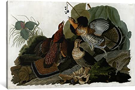 iCanvasART 1477-1PC6-18x12 Ruffed Grouse Canvas Print by John James Audubon, 1.5 by 18 by 12-Inch
