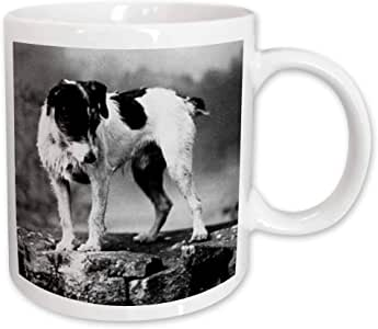 3dRose Jack Russell Terrier Black and White Ceramic Mug, 11-Ounce