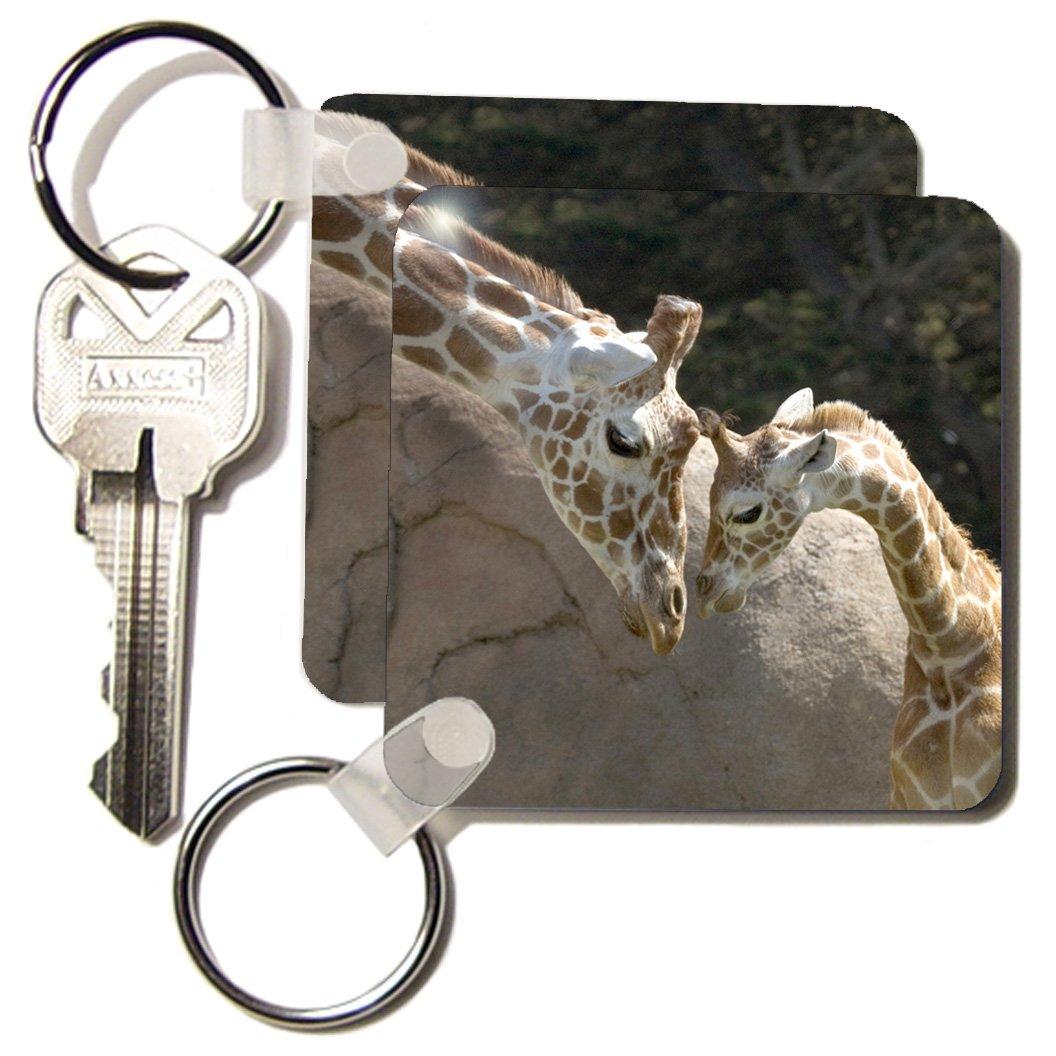 kc_96857 Danita Delimont - Giraffes - Mother and baby giraffe, San Francisco Zoo - US48 TAU0001 - Tananarive Aubert - Key Chains