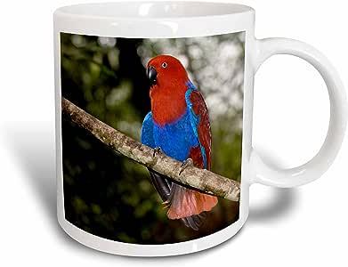 3dRose mug_84952_1 Papua New Guinea, Eclectus Parrot, Tropical Bird Oc12 Bfr0002 Bernard Friel Ceramic Mug, 11-Ounce