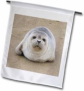 florene 水下动物–SEAL PUP 特写–旗帜 12 x 18 inch Garden Flag