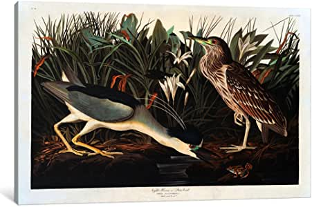 iCanvasART 1515-1PC6-18x12 Black-crowned Night Heron or Qua Bird Canvas Print by John James Audubon, 1.5 by 18 by 12-Inch