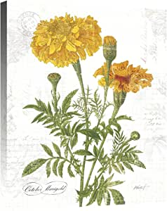 Global Gallery Katie Pertiet 'October Marigold on White' Giclee 拉伸帆布艺术品,55.88 x 71.12 cm