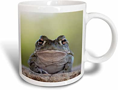 3dRose mug_9925_1 Sonoran Desert Toad, Bufo Alvarius Ceramic Mug, 11-Ounce