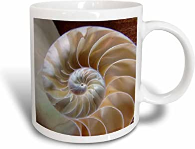 3dRose Nautilus Up Close Ceramic Mug, 11-Ounce