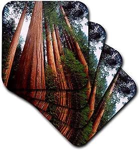 3dRose USA California, Sierra Nevada Sequoia Redwood Trees in The Sierra Ceramic Tile Coasters (Set of 4)