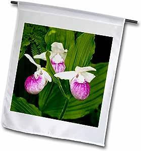 danita delimont–花–MN , itasca SP , showy lady-slipper 花朵–us27pha0000–皮特·霍金斯–旗帜 12 x 18 inch Garden Flag