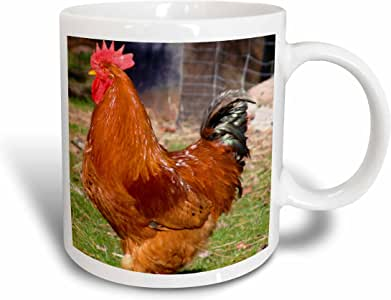 3dRose Beautiful Red Rooster on the Farm- Animal Photography - Ceramic Mug, 11-ounce (mug_43996_1)