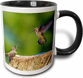 3drose danita delimont–鸟–annas 蜂鸟 . 圣诞老人 CRUZ ,加利福尼亚,美国–US05tno00820064–TOM norring–马克杯 黑色/白色 11 oz