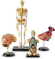 Learning Resources 解剖模型捆绑套装