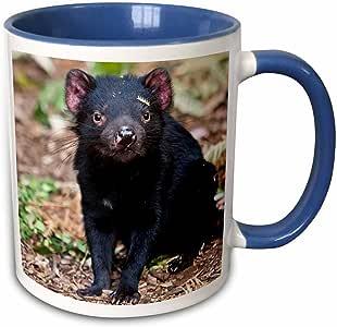 3drose danita delimont–野生动物–怪 DEVIL 野生动物,塔斯马尼亚,澳大利亚–AU01mzw0090–Martin zwick–马克杯 蓝/白 11 oz