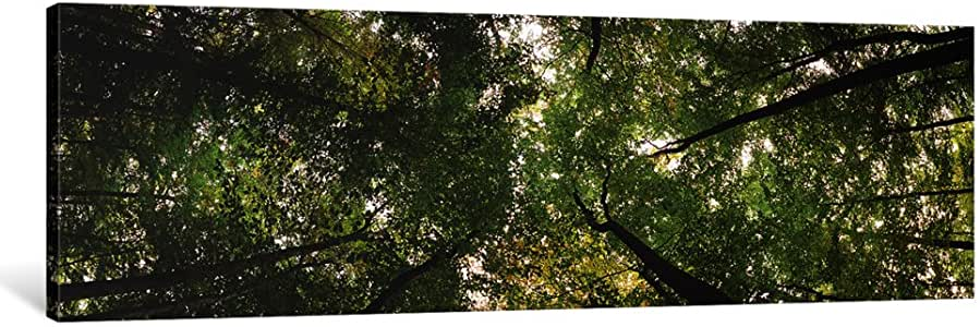 """iCanvasART 1 Piece Low Angle View of trees, Bavaria, Germany #2 Canvas Print by Panoramic Images, 48 x 16""""/0.75"""" Deep"""
